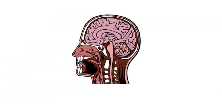 head cross section vector
