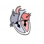 Heart Vector Medical